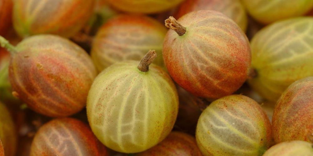 Φραγκοστάφυλο (gooseberry): Γιατί χαρατκτηρίζεται «superfood»;